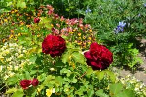 2014年5月30日ガーデン(バラ・花) 036 assyku