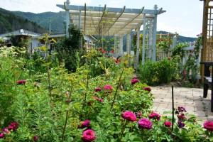 2014年5月30日ガーデン(バラ・花) 068 assyuku