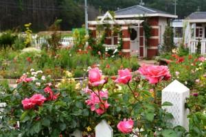 2014年6月6日ガーデン・バラ満開 055 assyuku