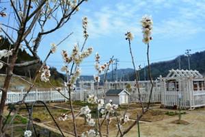 2015年3月29日制野、ガーデン花 003