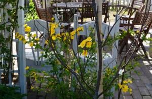 2015年4月22日ガーデン 014