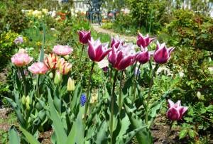 2015年4月22日ガーデン 075