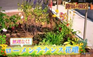 2015年10月25日鎌田さんNHK趣味の園芸 056