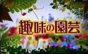 2015年10月25日鎌田さんNHK趣味の園芸 057