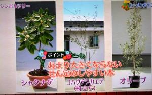 2015年10月25日鎌田さんNHK趣味の園芸 151