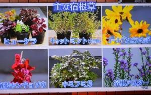 2015年10月25日鎌田さんNHK趣味の園芸 156