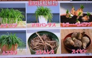2015年10月25日鎌田さんNHK趣味の園芸 157