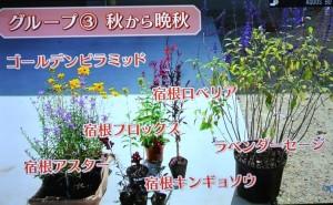 2015年10月25日鎌田さんNHK趣味の園芸 163