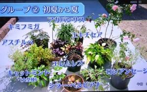 2015年10月25日鎌田さんNHK趣味の園芸 166