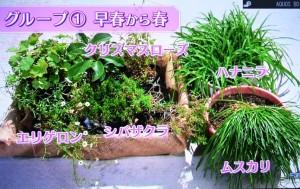 2015年10月25日鎌田さんNHK趣味の園芸 171