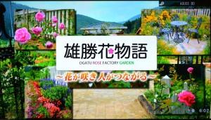 2016年456趣味の園芸・雄勝花物語の紹介 003